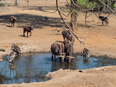 All change at the waterhole