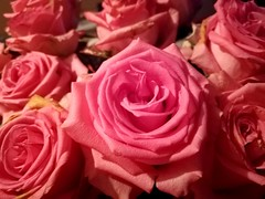 Roses #pink #flowers #roses