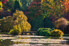 Autumn at Sheffield Park